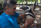 amitie incroyable entre un pingouin et un homme