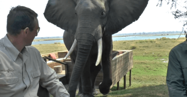 cet éléphant charge des touristes