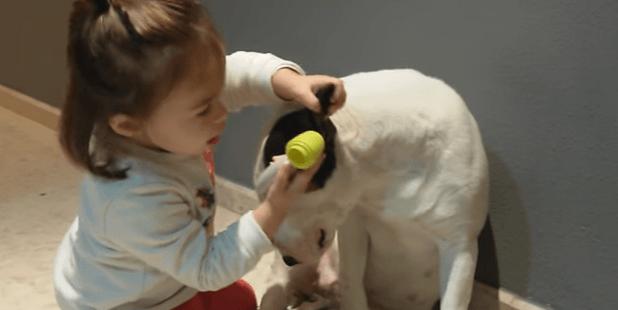 Chien qui joue au docteur avec une petite fille