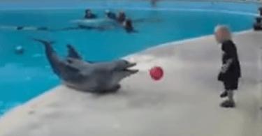 dauphin joue à la balle avec un enfant