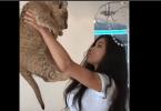 lionceau fait pipi sur le visage de sveta bilyalova