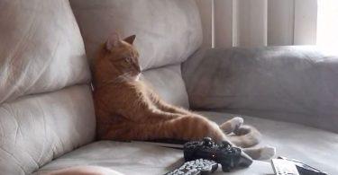chat concentré au son de la musique rock