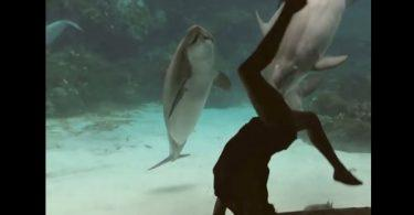 dauphin qui adore regarder de l'acrobatie
