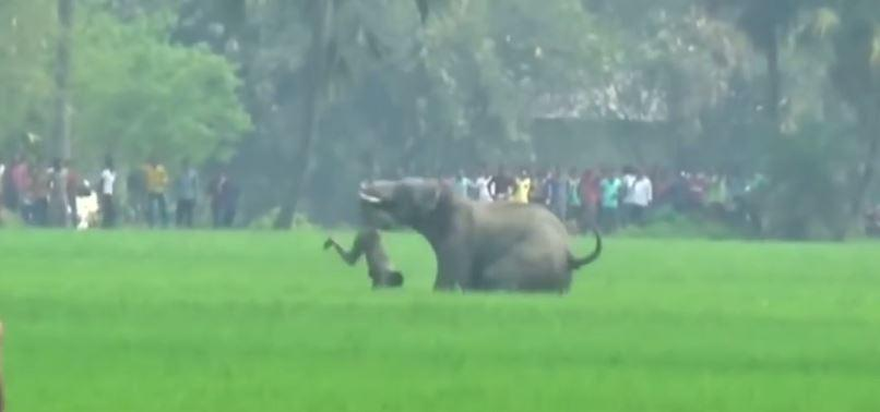 Eléphant meurtrier en Inde