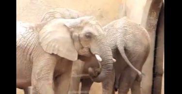 éléphant qui fouine un peu trop