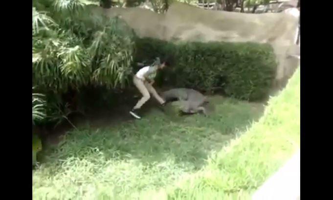 femme attaquée par un crocodile en tentant de le toucher