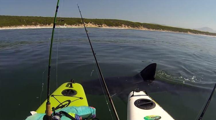 requin énorme fait trembler des kayakistes