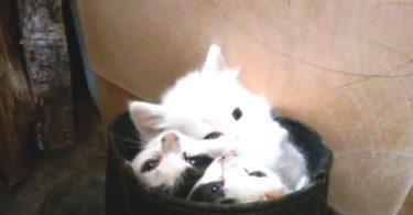 Trois chatons adorables confortablement installés dans une boîte