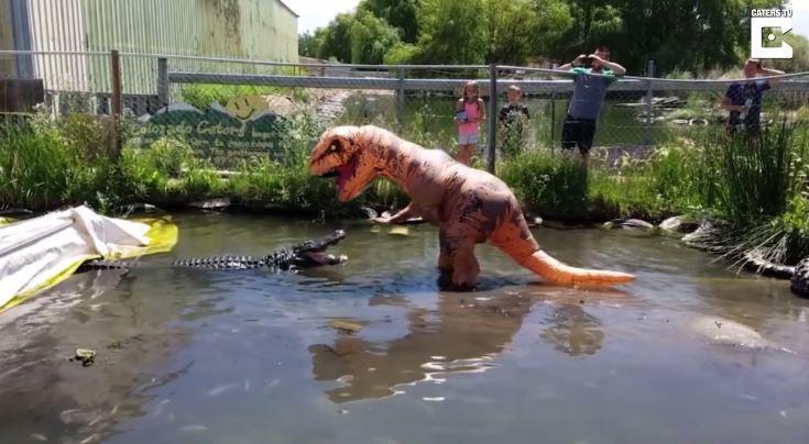 Un crocodile contre un homme déguisé en dinosaure