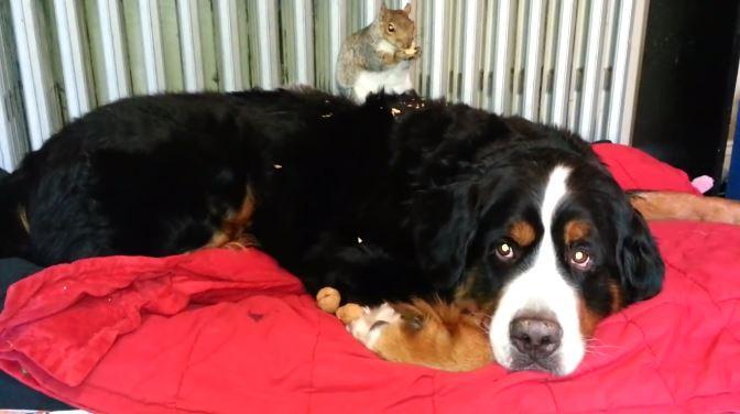 Un écureuil et un chien : une amitié hors du commun