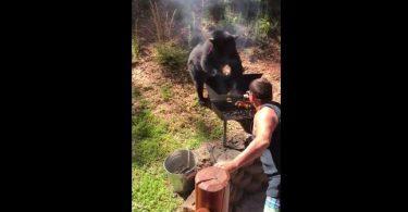 Un ours veut s'invite à un barbecue