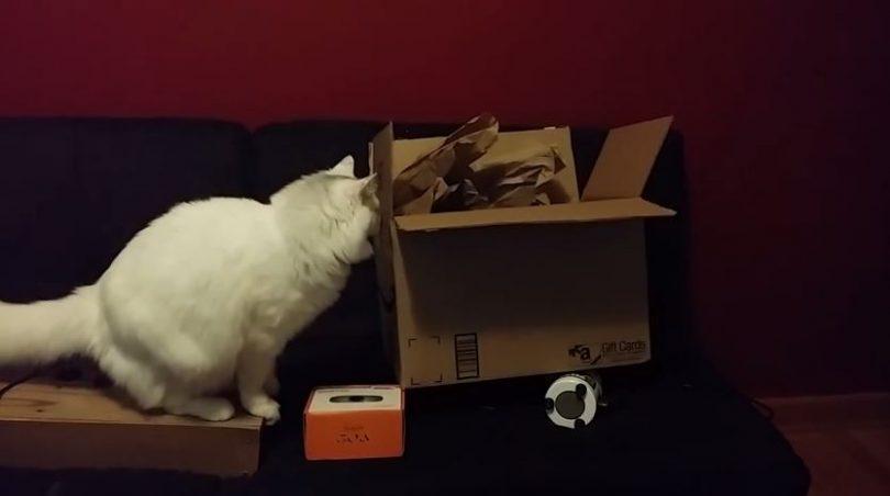 Chat piégé dans un carton