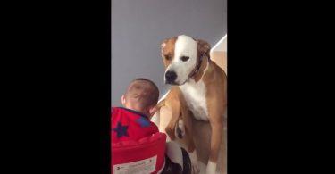 Chien qui prend soin d'un bébé